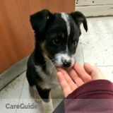 Dog Walker, Pet Sitter in Londonderry
