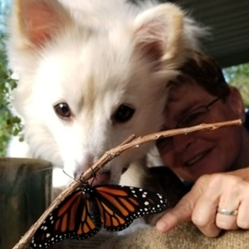 Available: Passionate Animal Lover in Sylva and surrounding areas.