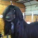 Pet Sitter in Selah