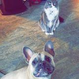 Dog Walker/ pet sitter
