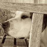 Dog Walker, Pet Sitter in Brookfield