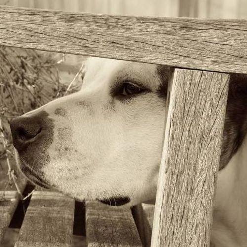 Pet Care Provider Travis Cakos's Profile Picture