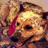 Dog Walker, Pet Sitter in Red Oak
