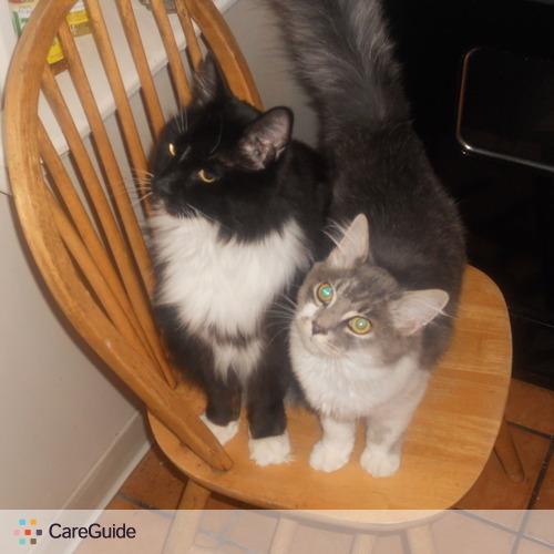 Pet Care Provider Rhonda Pollini's Profile Picture