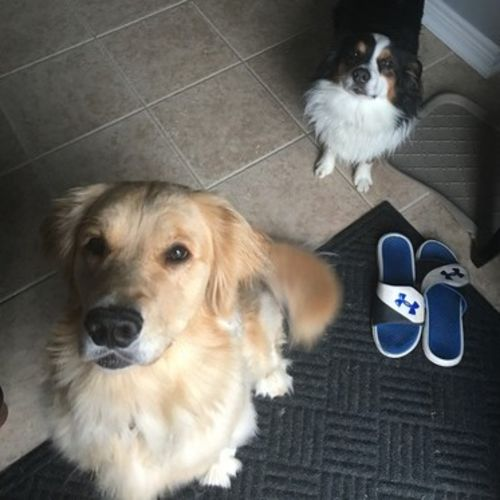 Pet Care Provider Amanda D Gallery Image 3