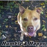 Humble & Happy Home for Furbabies