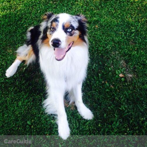 Pet Care Provider Alysha S's Profile Picture