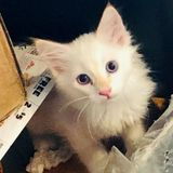 Seeking all around Animal Loving Super Star cat feeder...cleaner etc.
