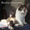 Brooklyn Paws, Inc.