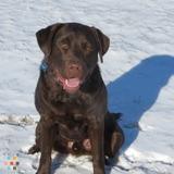 Dog Walker, Pet Sitter in Massapequa