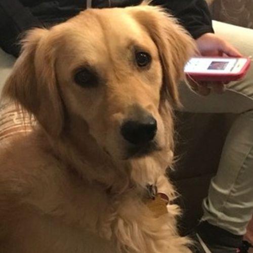 Pet Care Provider Faith Johnson's Profile Picture