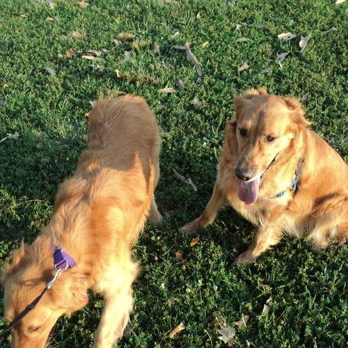 Pet Care Job John & Betsy R's Profile Picture