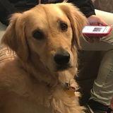 Dog Walker, Pet Sitter, Kennel in Halifax
