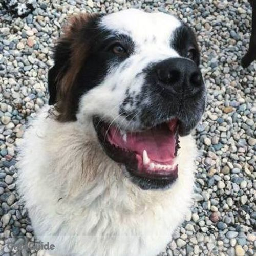Pet Care Provider Brieana Bartolotta's Profile Picture