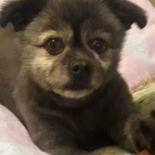 Pet Care Provider Janie Busch's Profile Picture