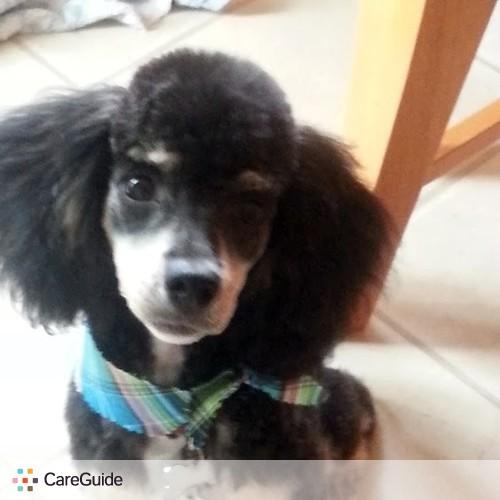 Pet Care Provider Rachel VERASTEGUI's Profile Picture