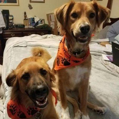 Pet Care Provider Jill R Gallery Image 2