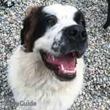 Dog Walker, Pet Sitter in Chesterfield