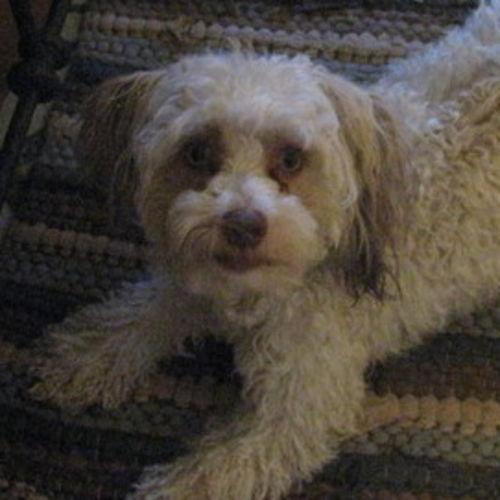 Pet Care Provider Vickey Percival's Profile Picture