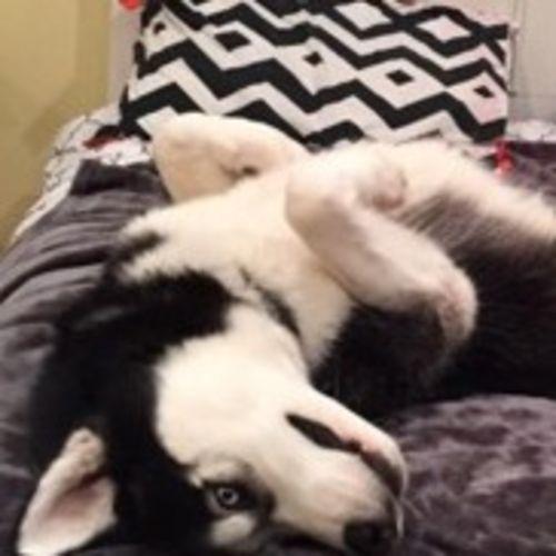 Pet Care Job Neomi S's Profile Picture