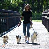Dog Walker, Pet Sitter, Kennel in Littleton