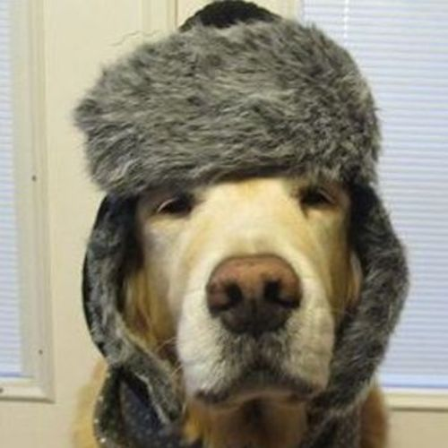 Pet Care Provider Marie R's Profile Picture