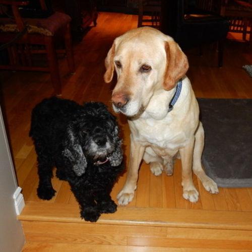 Pet Care Job Laura Wangen's Profile Picture