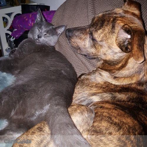 Pet Care Job Sarah Sebree's Profile Picture