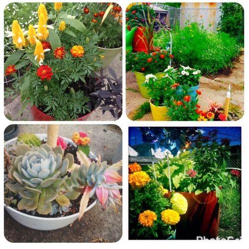 Gardener Provider Danielle E Gallery Image 1