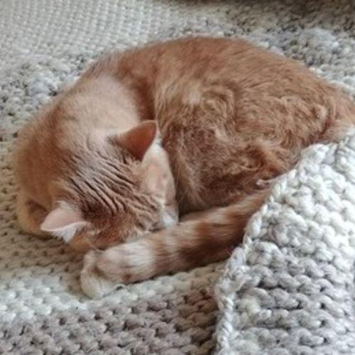 Pet Care Job Laurel S's Profile Picture