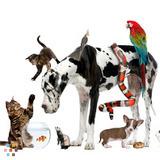 Dog Walker, Pet Sitter in Athol