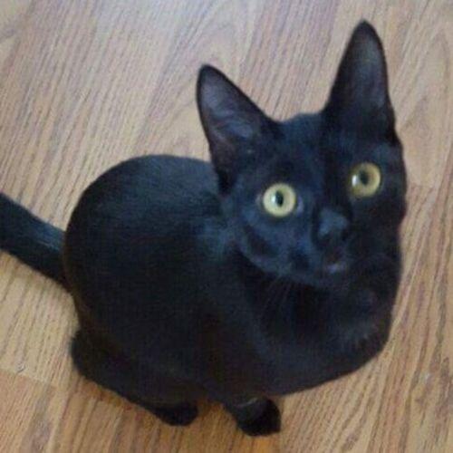Pet Care Job Cathy E's Profile Picture