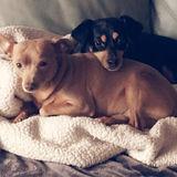 Dog Walker Job, Pet Sitter Job in Oxon Hill