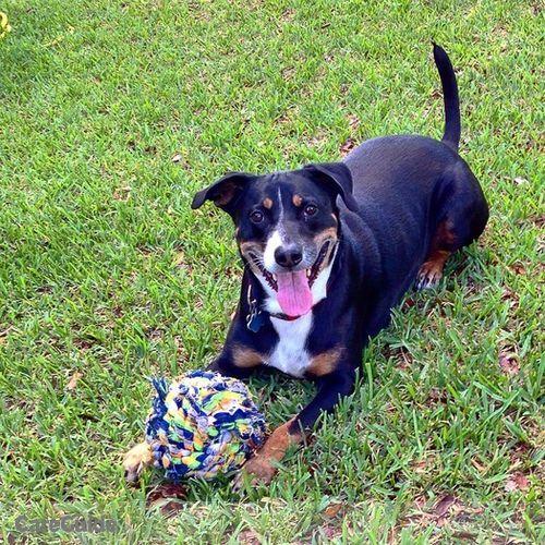 Pet Care Provider AlAn Brown's Profile Picture