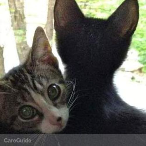 Pet Care Job Lisa Cusano's Profile Picture