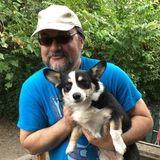 Pet care, dog walks, cat visits.
