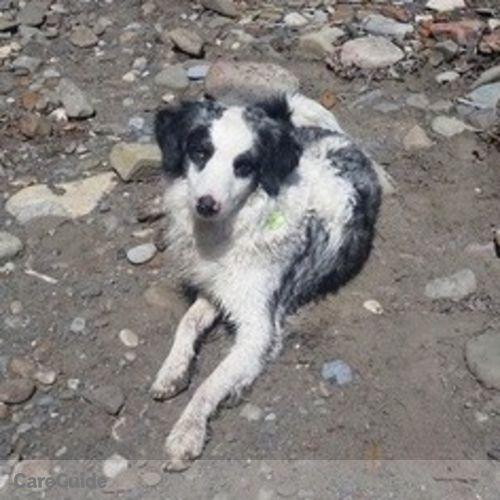 Pet Care Provider Celest Schrader's Profile Picture