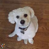 Dog Walker, Pet Sitter in San Diego