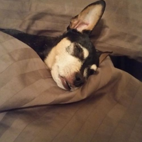 House Sitter Provider Rae B's Profile Picture