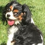 Available: Loving and Knowledgable Pet Care in Wayne NJ and surrounding area.