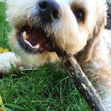 Pet Sitter/Walker Seeking Job Opportunities (hoping for snuggles and nice long walks)