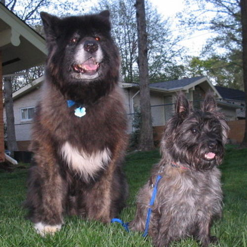 Pet Care Job Lisa Shannon's Profile Picture
