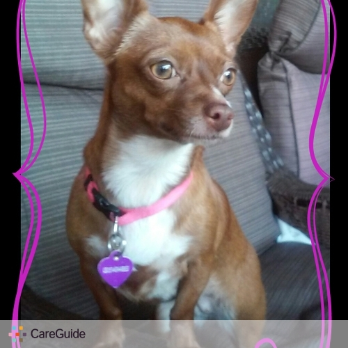 Pet Care Provider Angelica G's Profile Picture