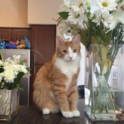 Pet Care Job Jeffrey Davidson Gallery Image 2