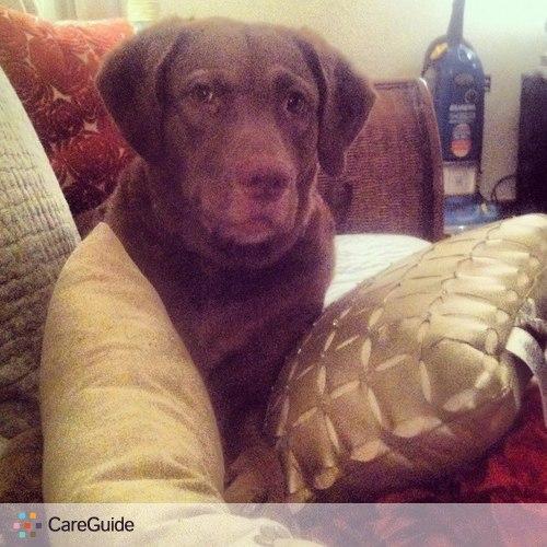 Pet Care Provider Matt N's Profile Picture