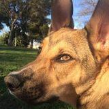 Responsible Trustworthy Pet Sitter in Manteca