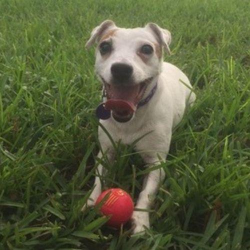 Pet Care Provider Trenda Martin Gallery Image 2