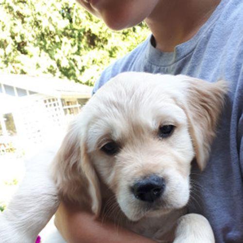 Pet Care Provider Kristina Z's Profile Picture