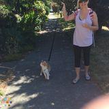 Dog Walker, Pet Sitter in Seattle