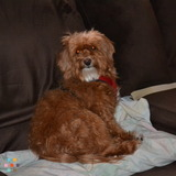 Dougs Dawg Sitting And Other Pet Services